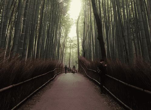 Photo-Japon2.-RDMpng