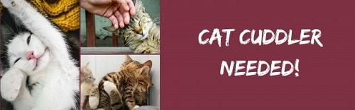 Job de rêve, Passer ses heures à caresser des chats : le nouveau job de rêve