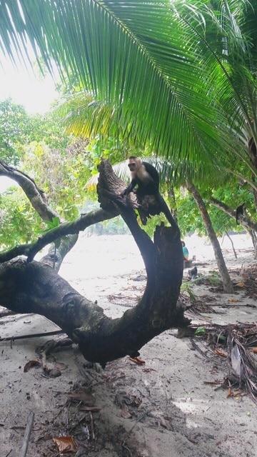 Costa Rica, Road-trip de Clément en Amérique Latine : Costa Rica